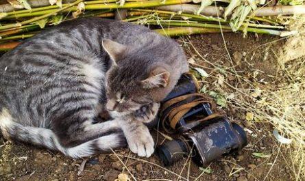 Установлена личность живодера который убил кота и издевался над его трупом.