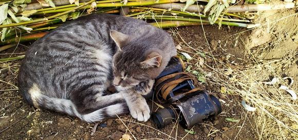 Установлена личность живодера, который убил кота и издевался над его трупом