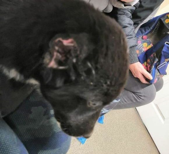 Бездомному щенку отрезали уши и оторвали хвост