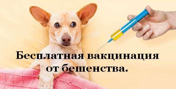 Бесплатная вакцинация от бешенства