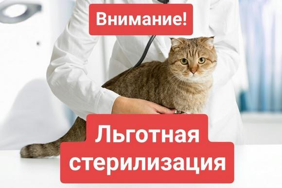 Льготная стерилизация собак и кошек в Самарской области