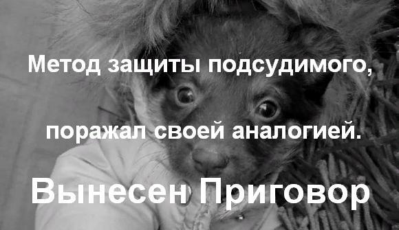 Вынесен приговор за жестокое убийство щенка
