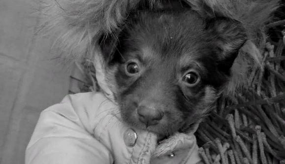 В Самаре за жестокое убийство щенка будут судить Маврина М.П.