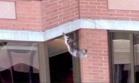 Вынесен приговор девушке выбросившей кошку с 8-го этажа
