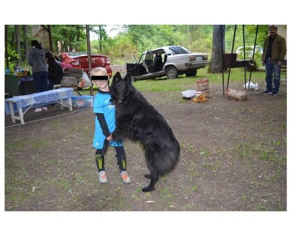 Убитая собака любила детей